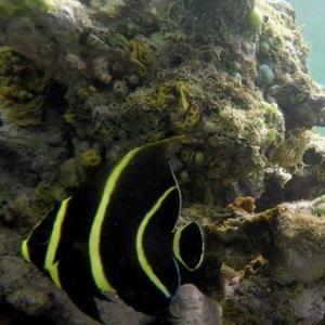peixes piscinas naturais ilha de boipeba
