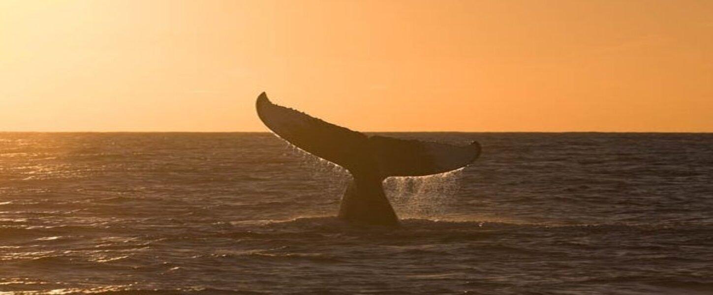 Passeio de Observação da baleia Jubarte em Morro de São Paulo