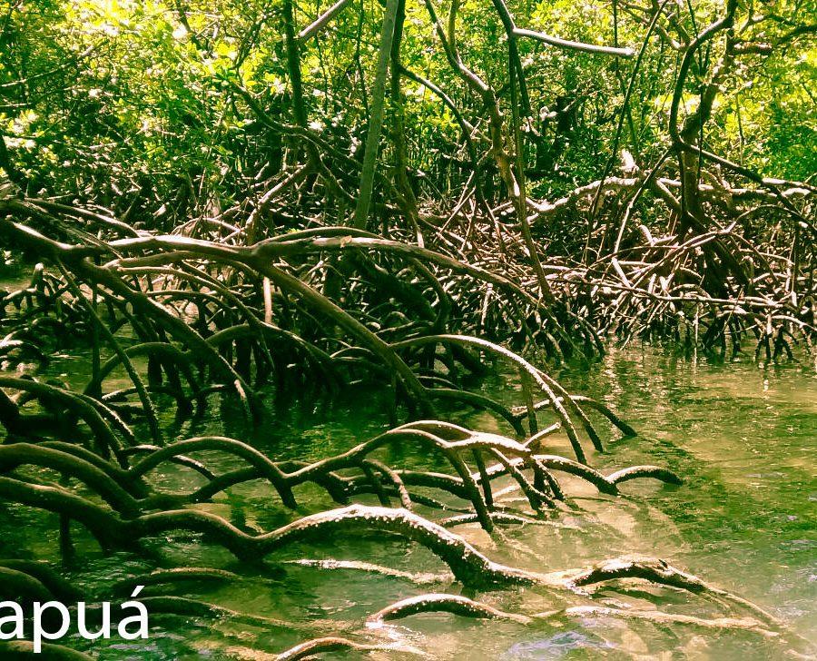 manguezais praia de garapua
