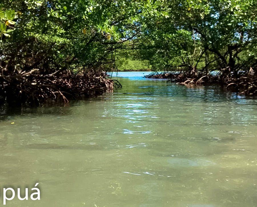 manguezal garapua ilha de tinhare de t