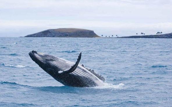 baleia jubarte em morro de São Paulo
