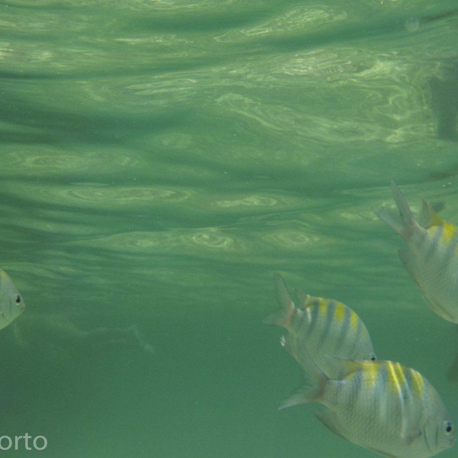 peixes passeio piscinas naturais