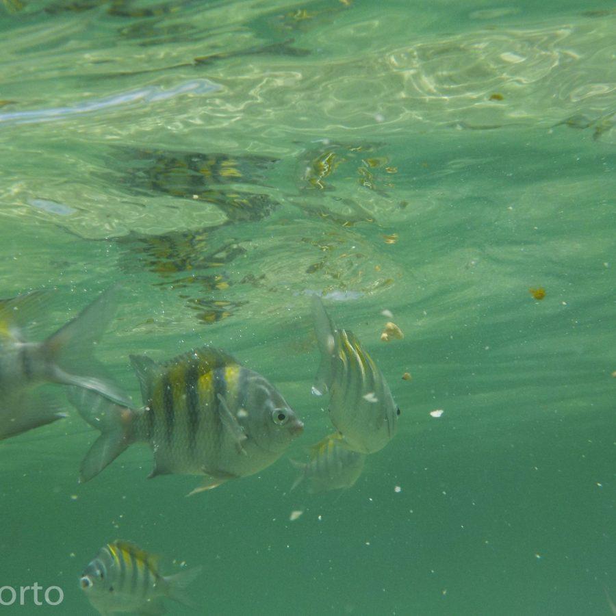 peixes piscinas naturais morere Boipeba