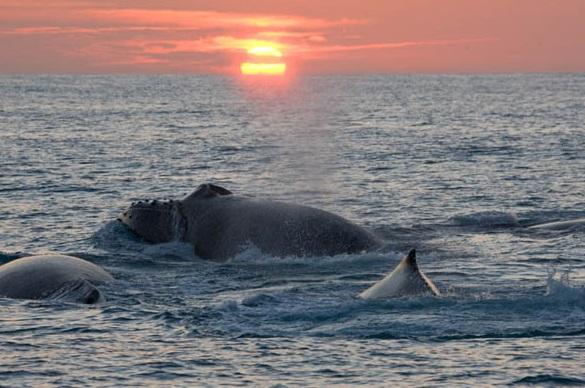 por do sol baleias jubarte