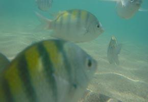 Peixes das piscinas naturais da Quarta Praia de Morro de São Paulo
